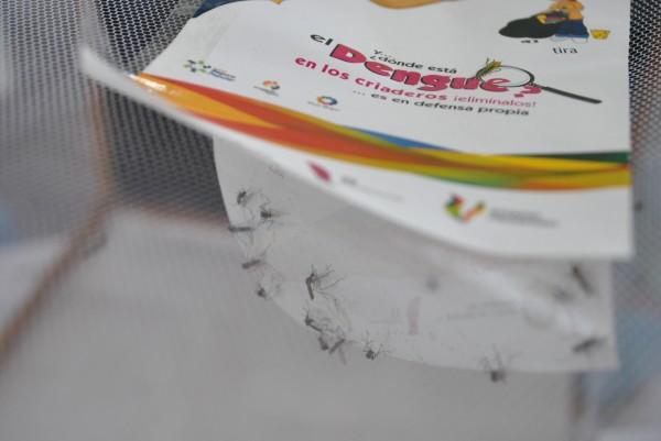 Veracruz y Jalisco encabezan en casos de dengue a nivel nacional