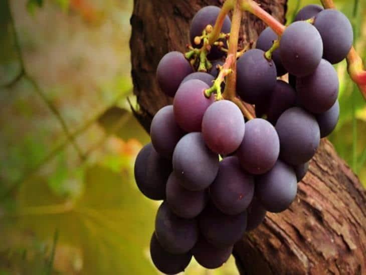 México concreta exportación de uva sonorense a Corea del Sur