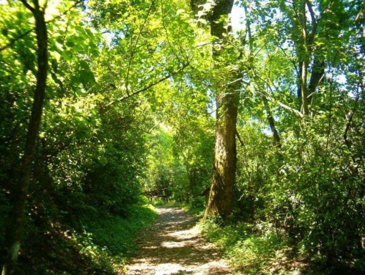 Política ambiental, encaminada a resarcir daños: II informe de AMLO