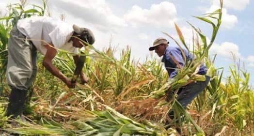 Veracruz, entidad con fuerte potencial en agricultura