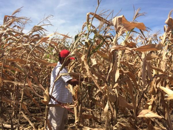 Esperan reactivar la producción agro en Cosoleacaque