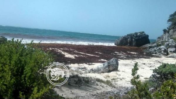 Alarma por un mar de algas entre África y el Caribe que crece gracias a fertilizantes