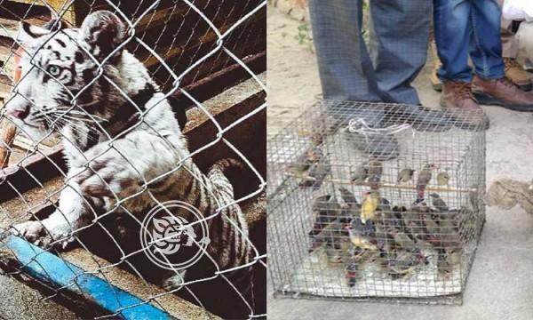 Incautan miles de animales salvajes tras operativo internacional