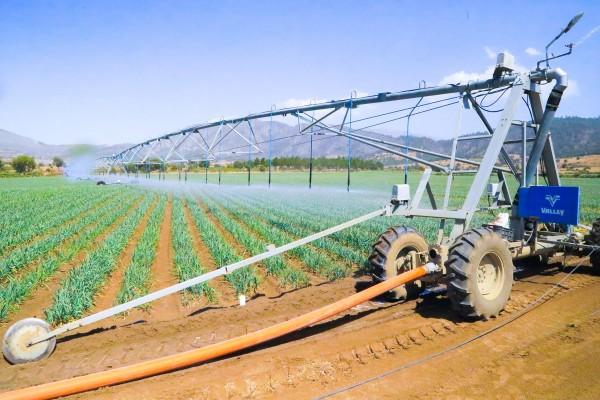 Previenen productores plagas en cultivos de la zona norte