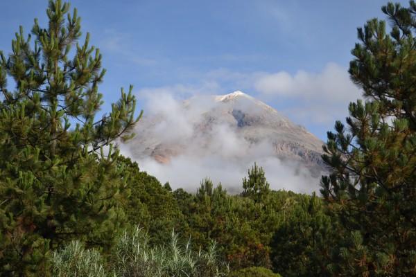 Buscan sanar al Pico de Orizaba con reforestación
