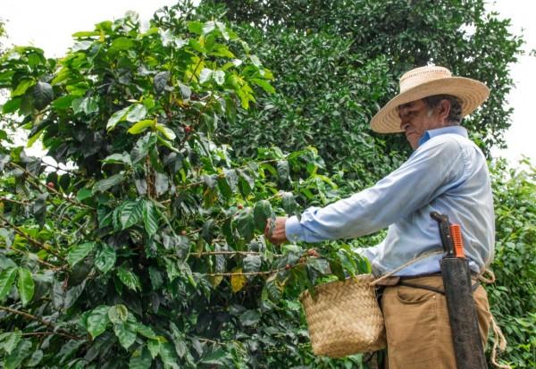 Bajos precios ponen en jaque a cafeticultores de Veracruz