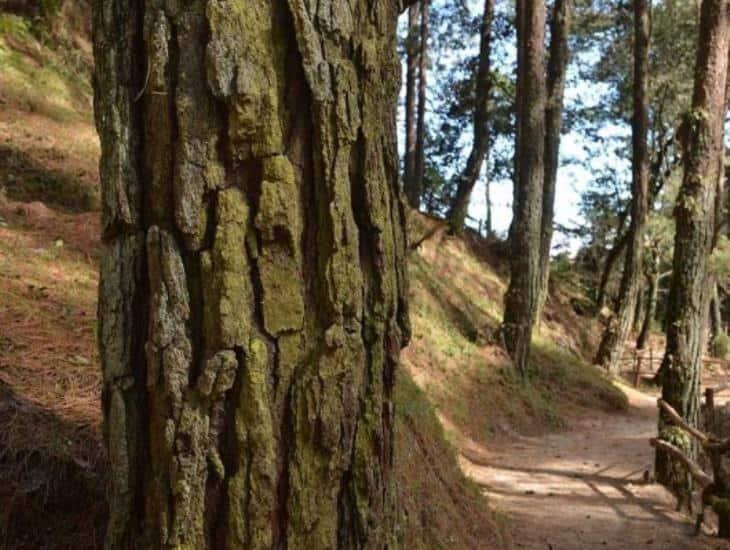 México, entre los 5 países de AL que perdieron más bosques primarios