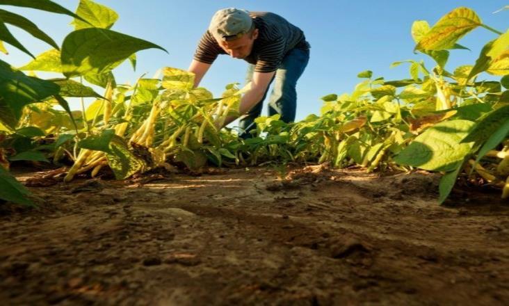 De temporal, 75 % de la agricultura en México; necesario saber de cambio climático