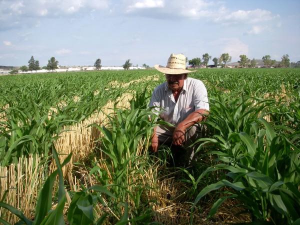 Apoyos al campo y no prebendas, pide CNC desde Veracruz
