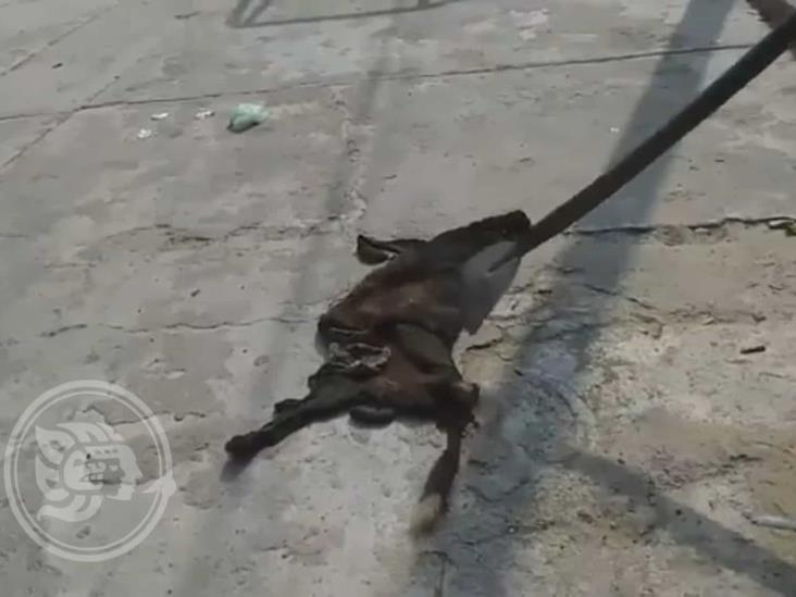 Estarían comercializando carne de perro en Rodríguez Clara