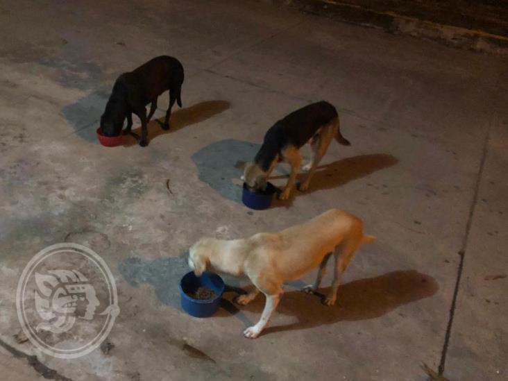Amenazan con envenenar a perros callejeros en Cosoleacaque