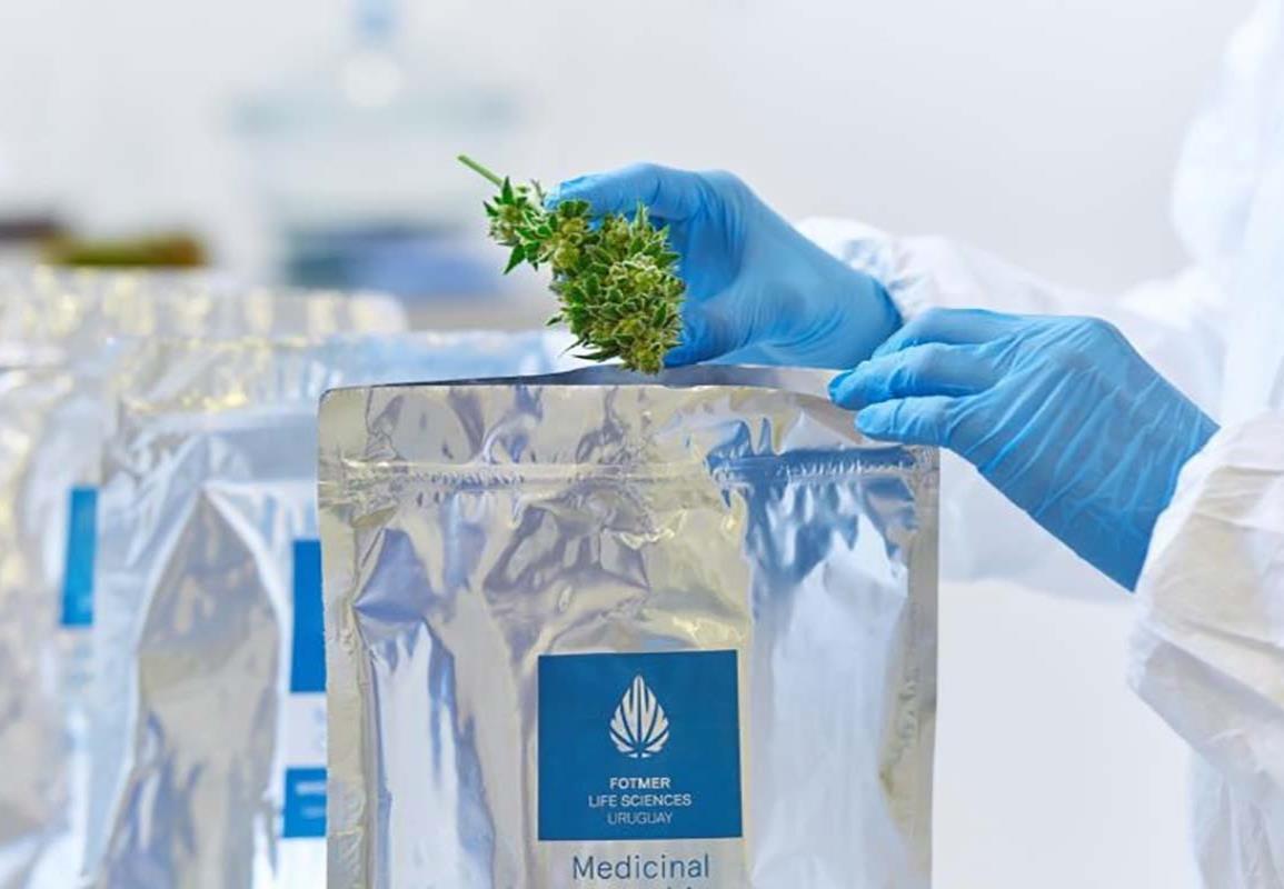 Sexta edición de Expocannabis Uruguay, el evento internacional más importante de la industria en la región