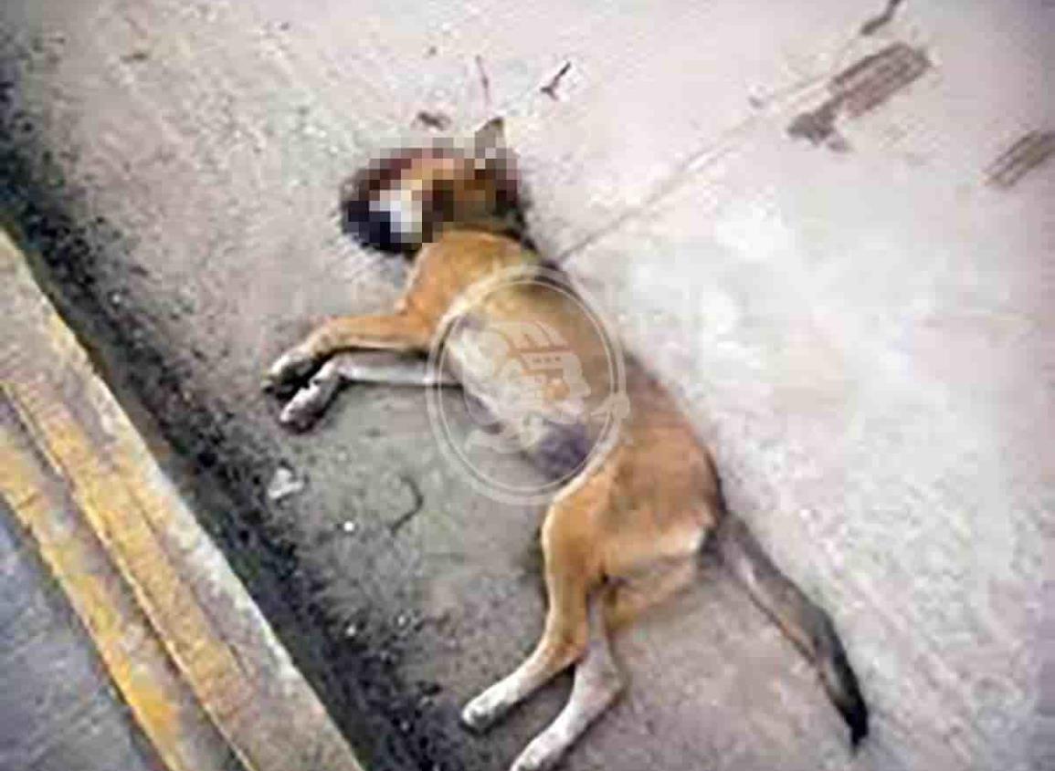 Continúa maltrato animal en Villa Cuichapa