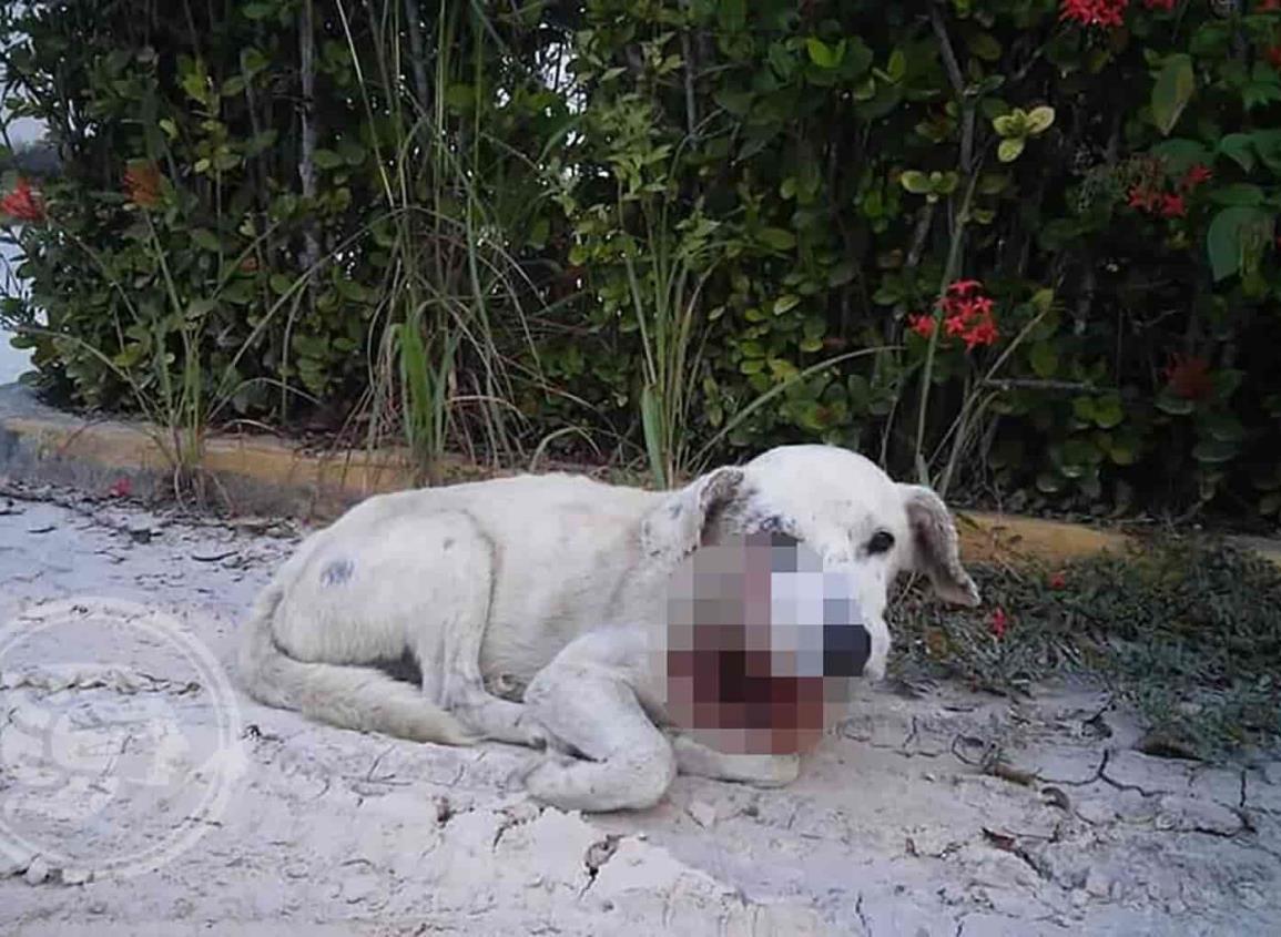 En Las  Choapas, machetean a perrito callejero
