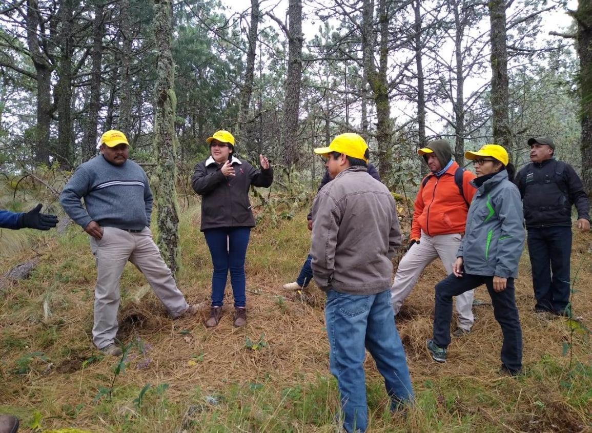 Rehabilita SEDEMA 10 mil metros de brechas cortafuego en San Pedro del Monte