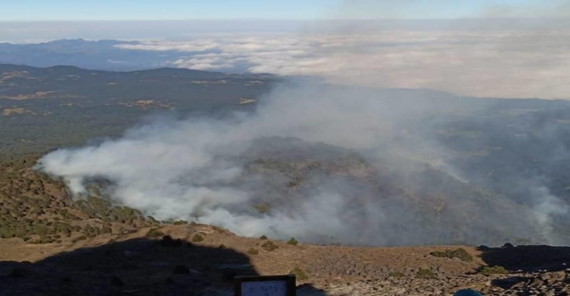 Incendio en Parque Cofre de Perote, Veracruz, daña 45 hectáreas