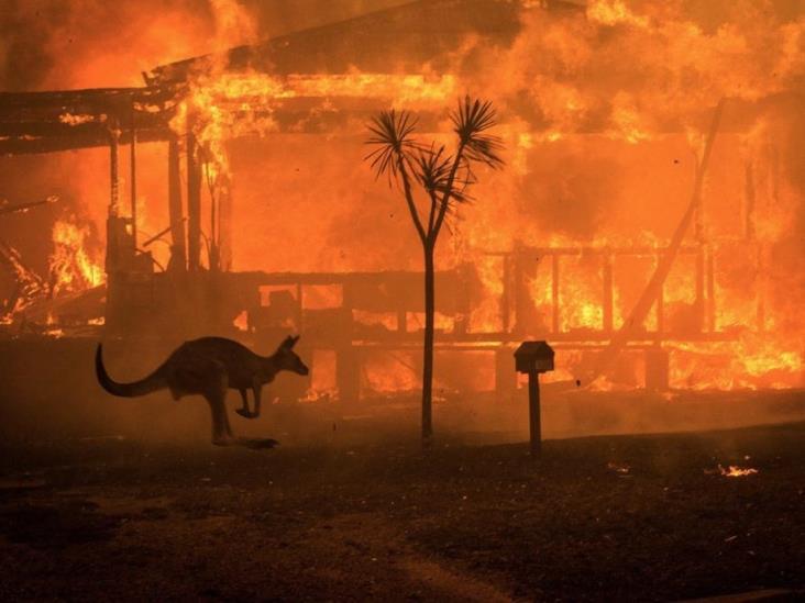 Aumentan a mil millones los animales muertos en Australia por incendios