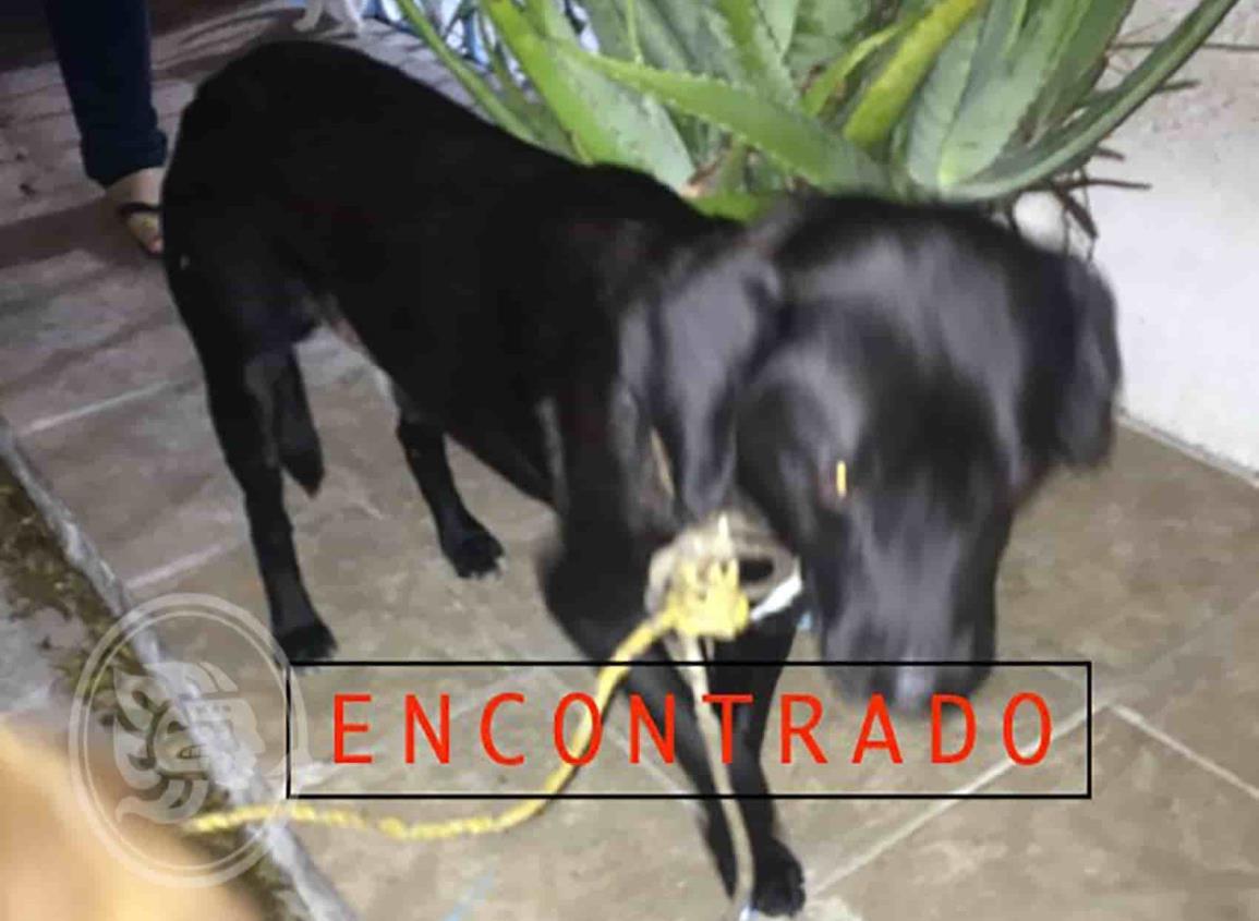 Maltrato a perrito indigna a minatitlecos en redes