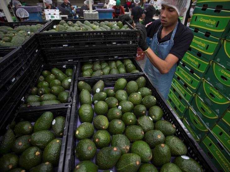 Cerveza y aguacate logran récord de exportaciones en México