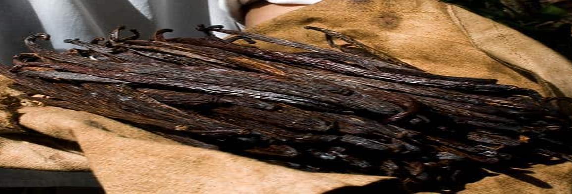Se consume en México 95% de vainilla artificial
