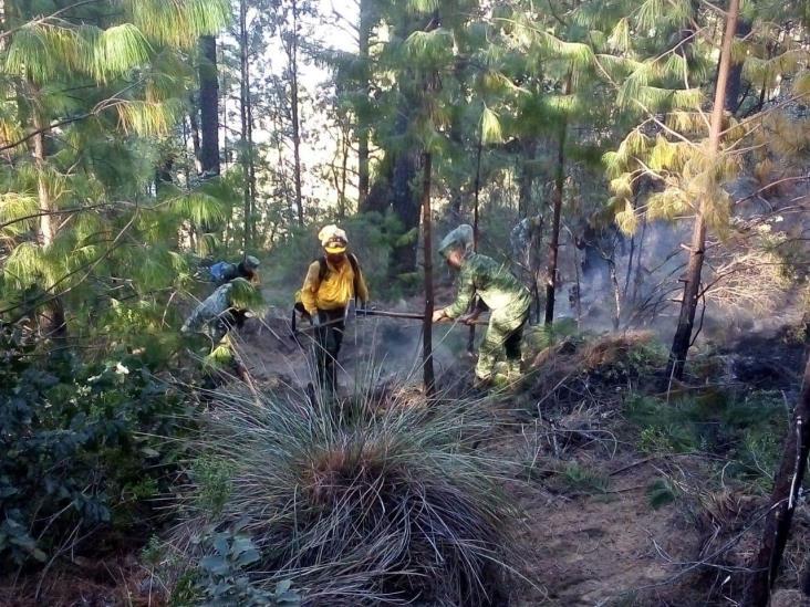 80% de control y 30% de liquidación del incendio forestal en Perote