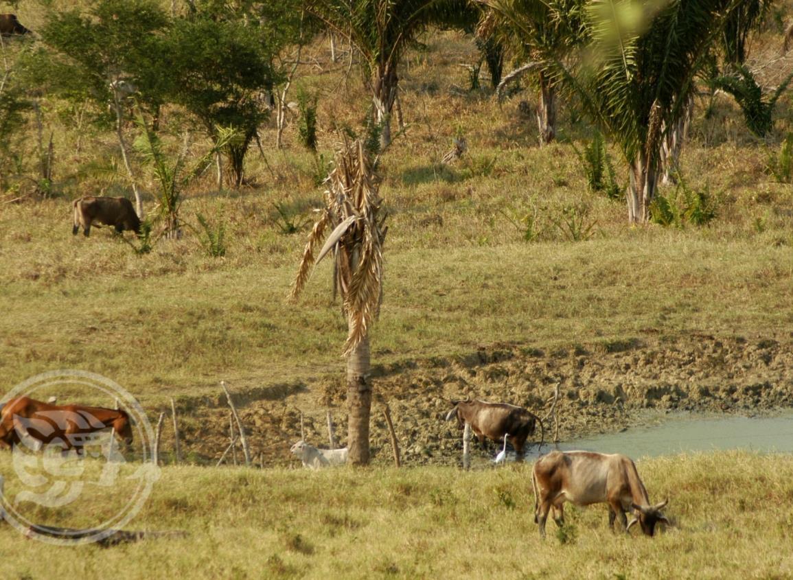 Sector ganadero de Veracruz enfrenta severa crisis por sequía