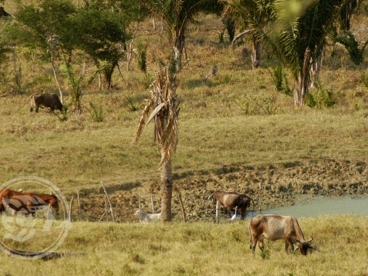 Anormalmente secos, 20 municipios de la entidad veracruzana