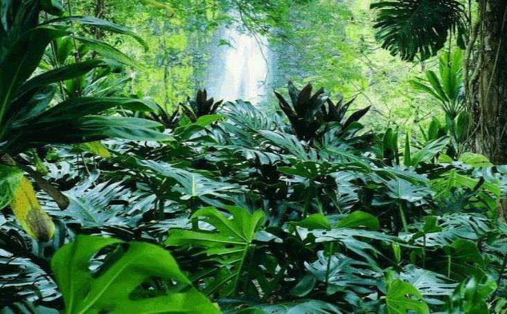 Letra muerta, protección a áreas naturales de Veracruz