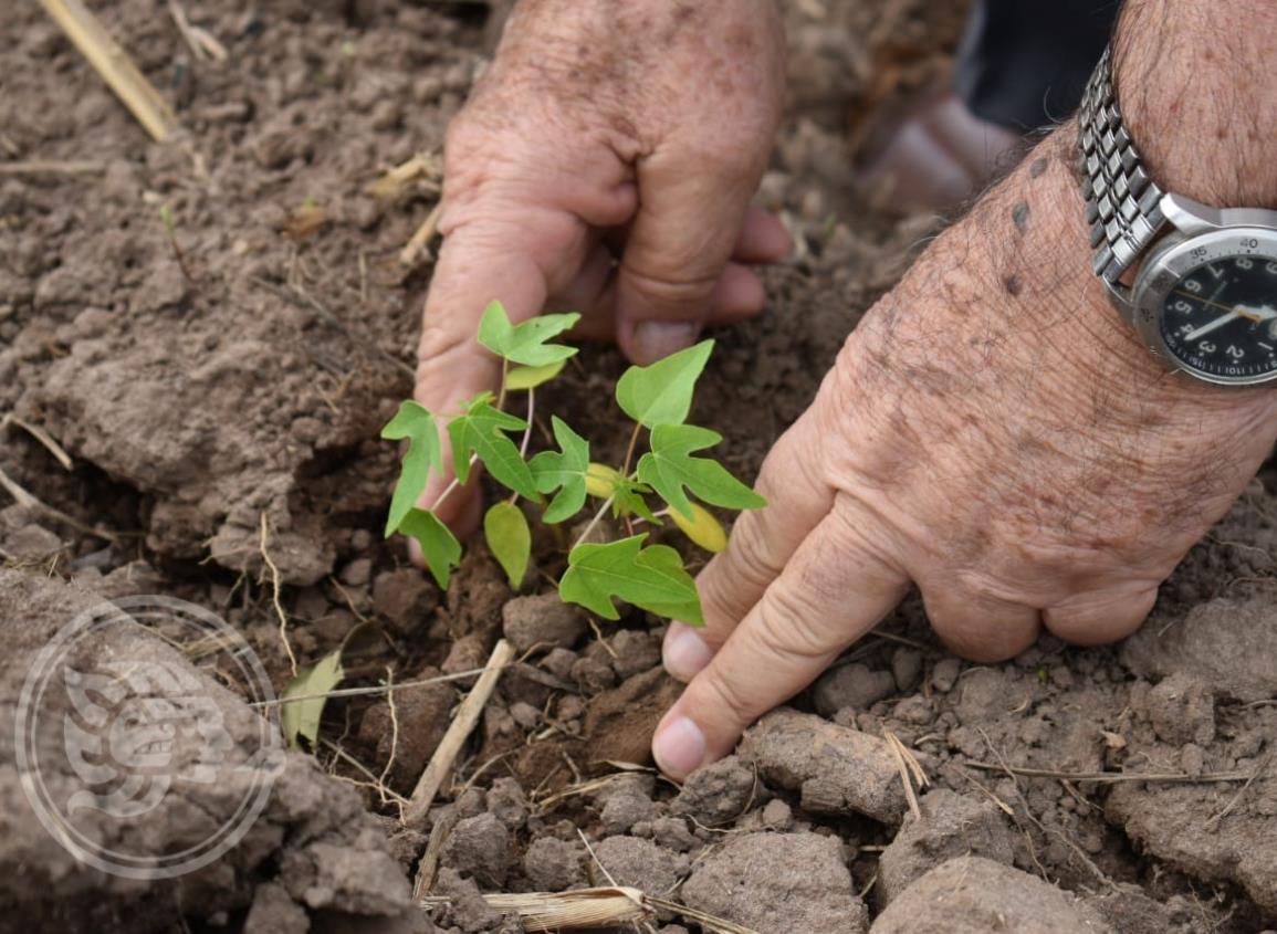 Campesinos de Cosolea son capacitados en la siembra de papaya