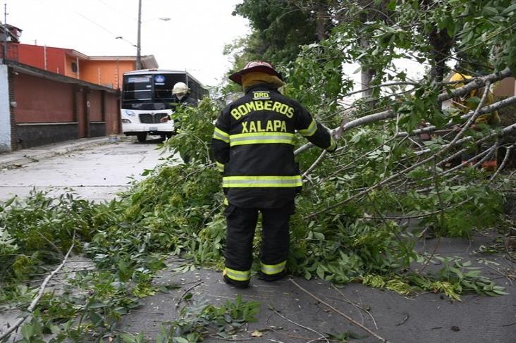 Caída de árboles y daño a estructuras tras paso de Frente Frío en Veracruz