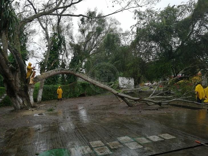 FF 41 deja árboles y cables caídos en Poza Rica
