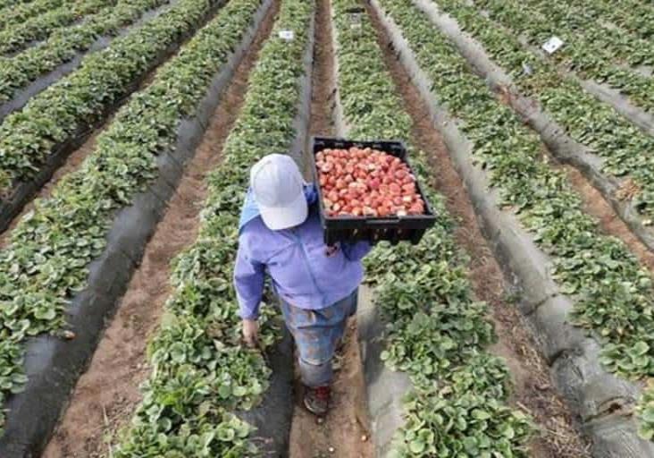 Van por prácticas agrícolas sustentables en México