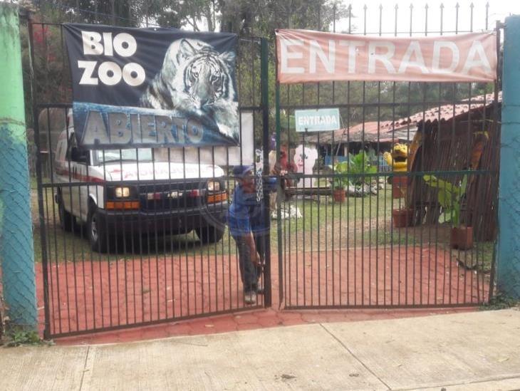 Tigre nacido en Bio Zoo de Córdoba se llamará Covid