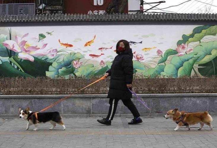 En Reino Unido entrenan a perros para detectar coronavirus