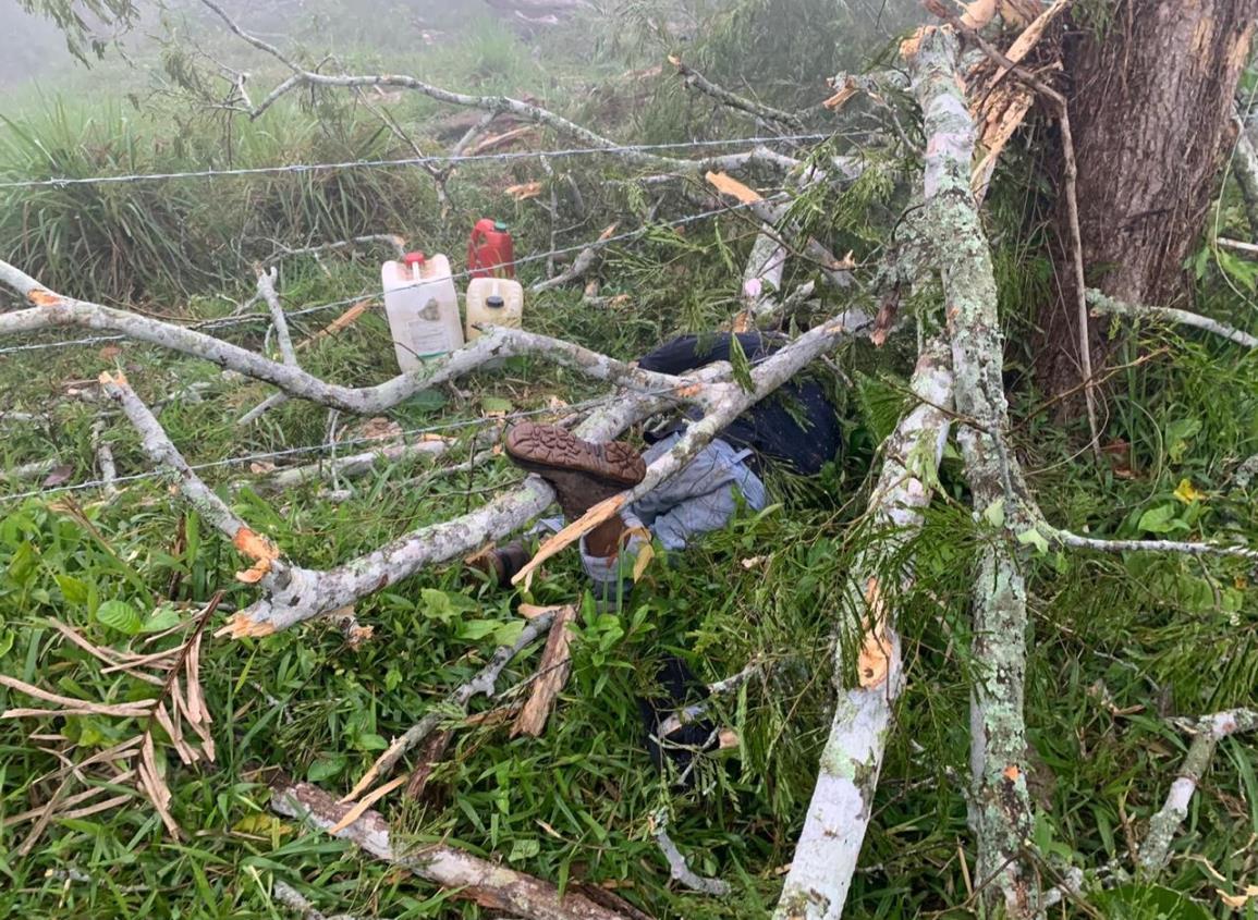 Muere obrero mientras talaba árbol en Sayula