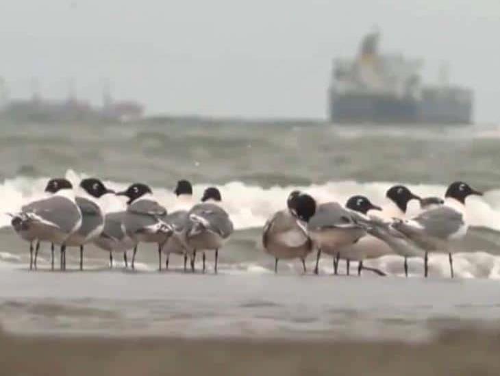 Crece avistamiento de especies marinas en playas de Veracruz