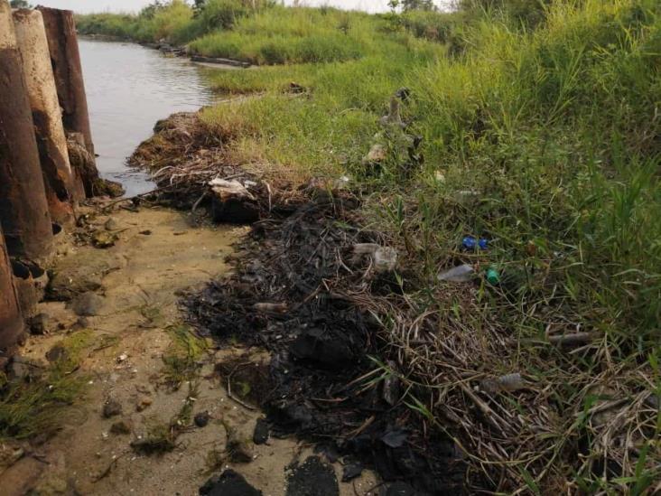Observan lirio cubierto de crudo en el río Coatzacoalcos