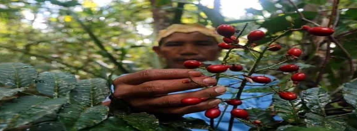 Indígenas tratan el Covid-19 con plantas medicinales en el Amazonas
