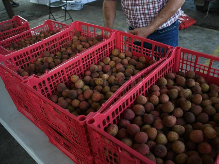Impulsan mercado interno para vainilla, plátano, mango y litchi en Veracruz