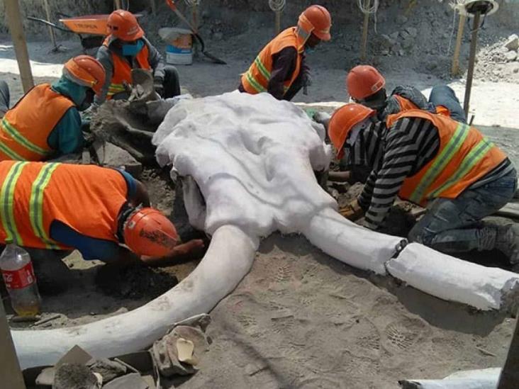 Encuentran restos de 60 mamuts en el nuevo Aeropuerto de Santa Lucía