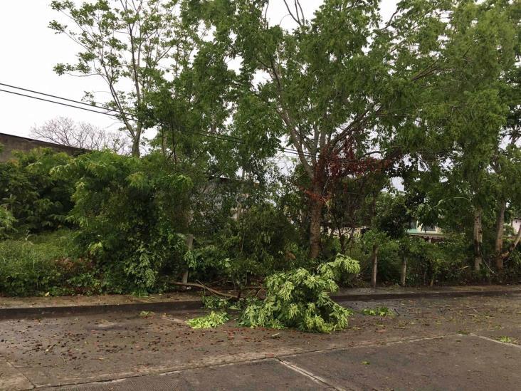 Afectó turbonada 16 municipios del norte de Veracruz: SPC
