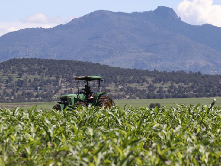 Destaca Sedarpa labor de productores veracruzanos durante pandemia