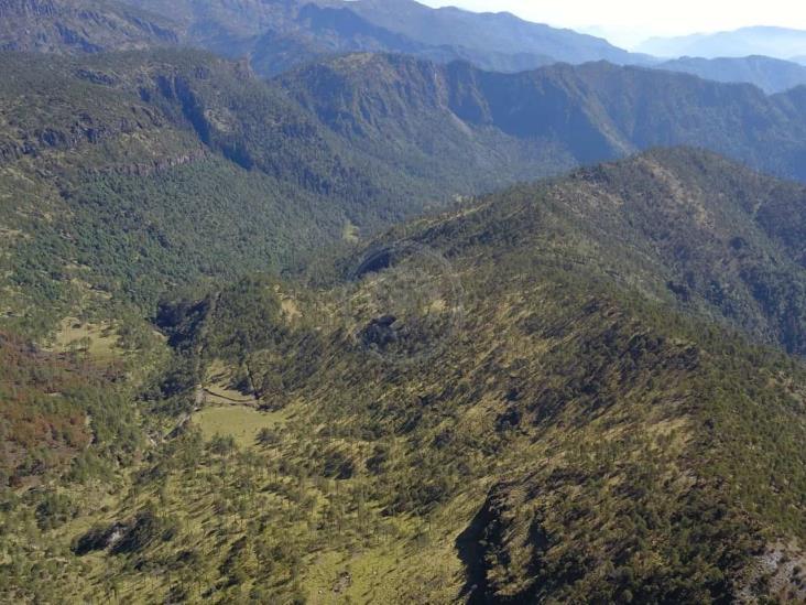 Talamontes depredan centro de Veracruz ante nula vigilancia