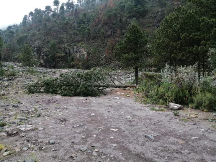 Por cambio climático, plagas devastan Parque Nacional Pico de Orizaba