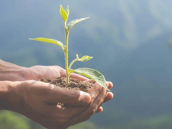 Fondo Mundial para Medio Ambiente aprobó cuatro proyectos para México