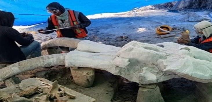 Inicia INAH estudio de yacimientos de mamuts en Santa Lucia