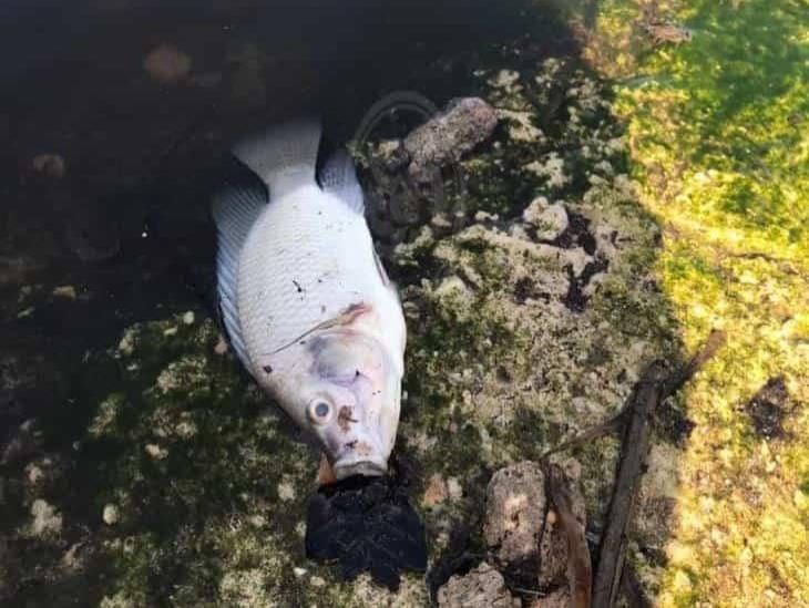 Mortandad de peces en laguna colindante con basurero de Allende