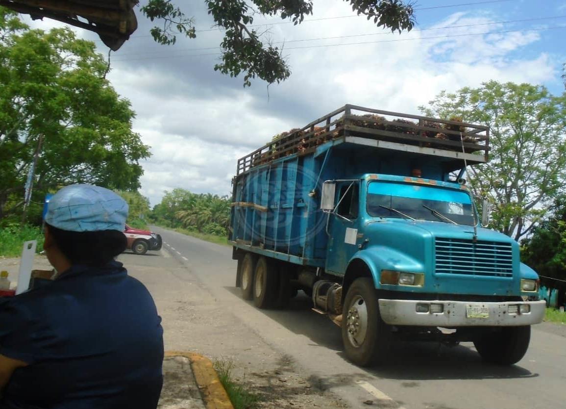 Campesinos de Soteapan buscan comercializar producción de coyol