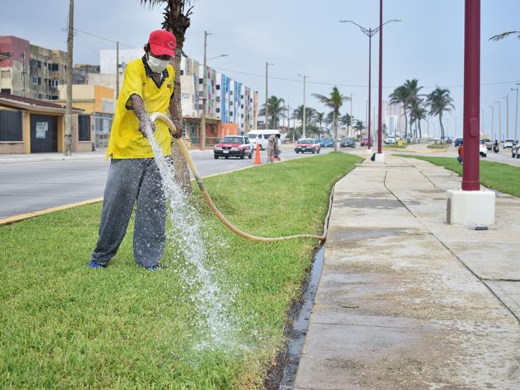 Dan mantenimiento al pasto del camellón central del Malecón