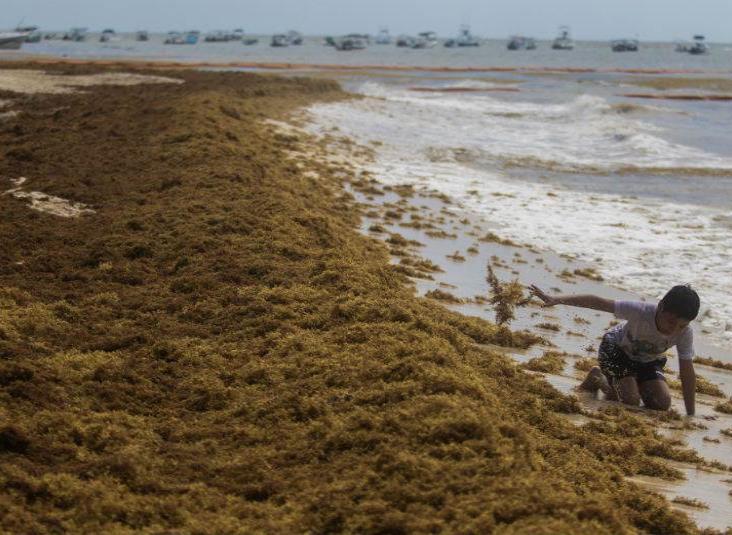 Polvo del Sahara propiciará reproducción de sargazo y afectará las playas de Yucatán